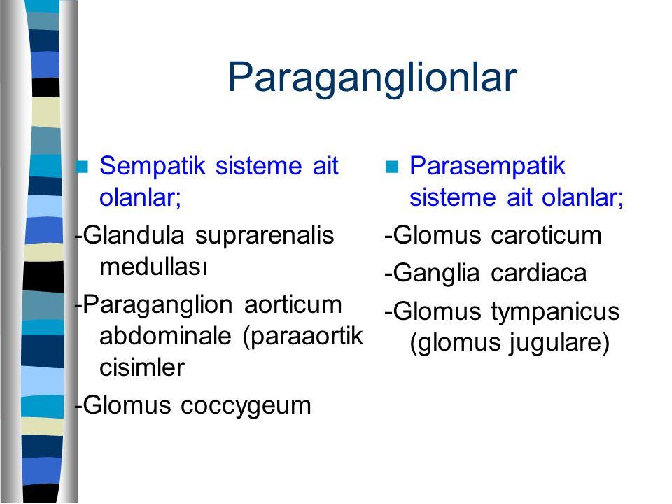 Paraganglionlar Sempatik sisteme ait olanlar; -Glandula suprarenalis medullası -Paraganglion aorticum abdominale (paraaortik cisimler -Glomus coccygeu