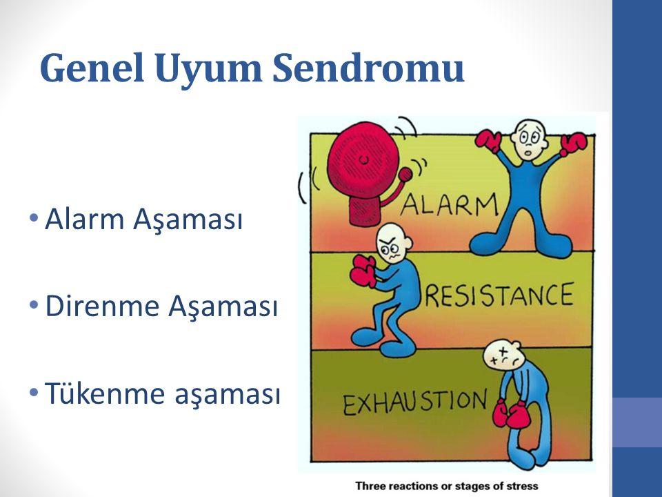 Genel Uyum Sendromu Alarm Aşaması Direnme Aşaması Tükenme aşaması