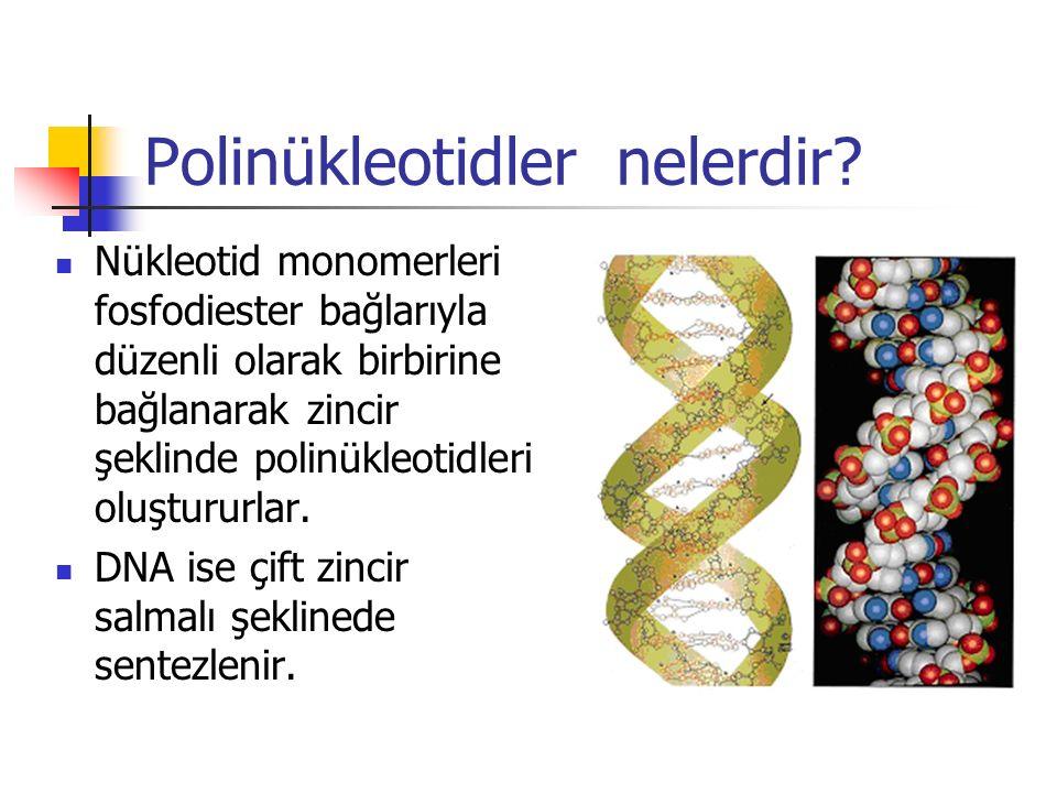 Polinükleotidler nelerdir? Nükleotid monomerleri fosfodiester bağlarıyla düzenli olarak birbirine bağlanarak zincir şeklinde polinükleotidleri oluştur