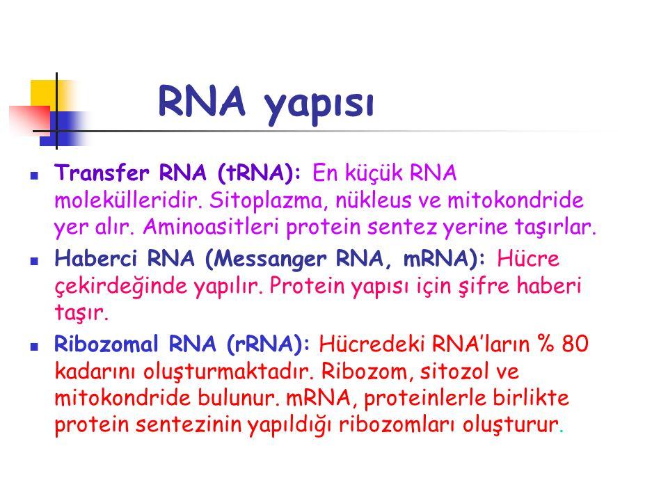 RNA yapısı Transfer RNA (tRNA): En küçük RNA molekülleridir. Sitoplazma, nükleus ve mitokondride yer alır. Aminoasitleri protein sentez yerine taşırla