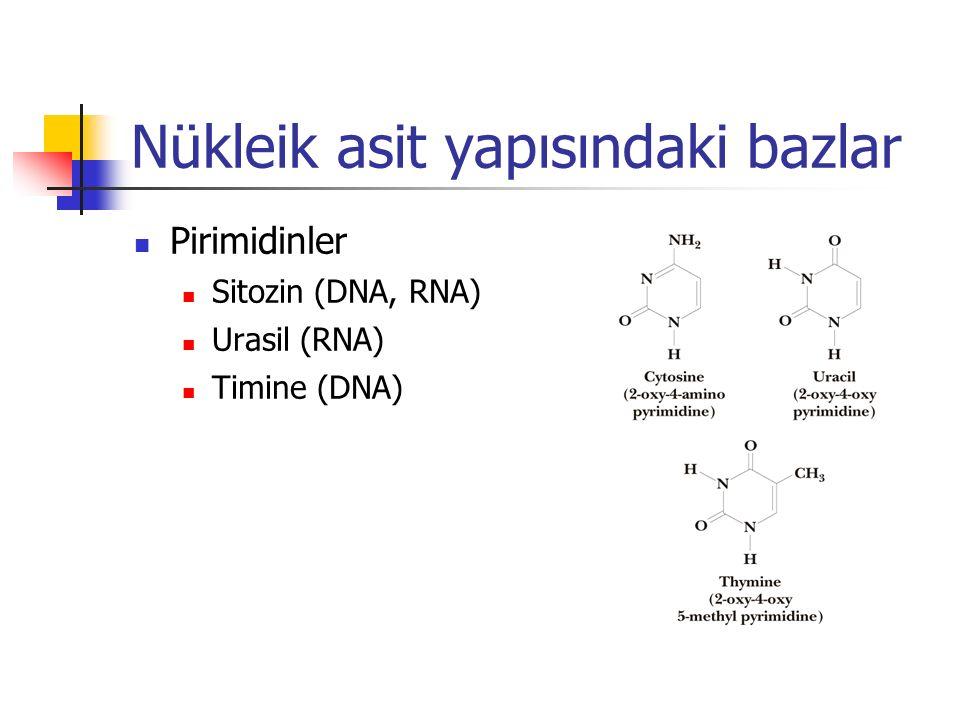 Nükleik asit yapısındaki bazlar Pirimidinler Sitozin (DNA, RNA) Urasil (RNA) Timine (DNA)