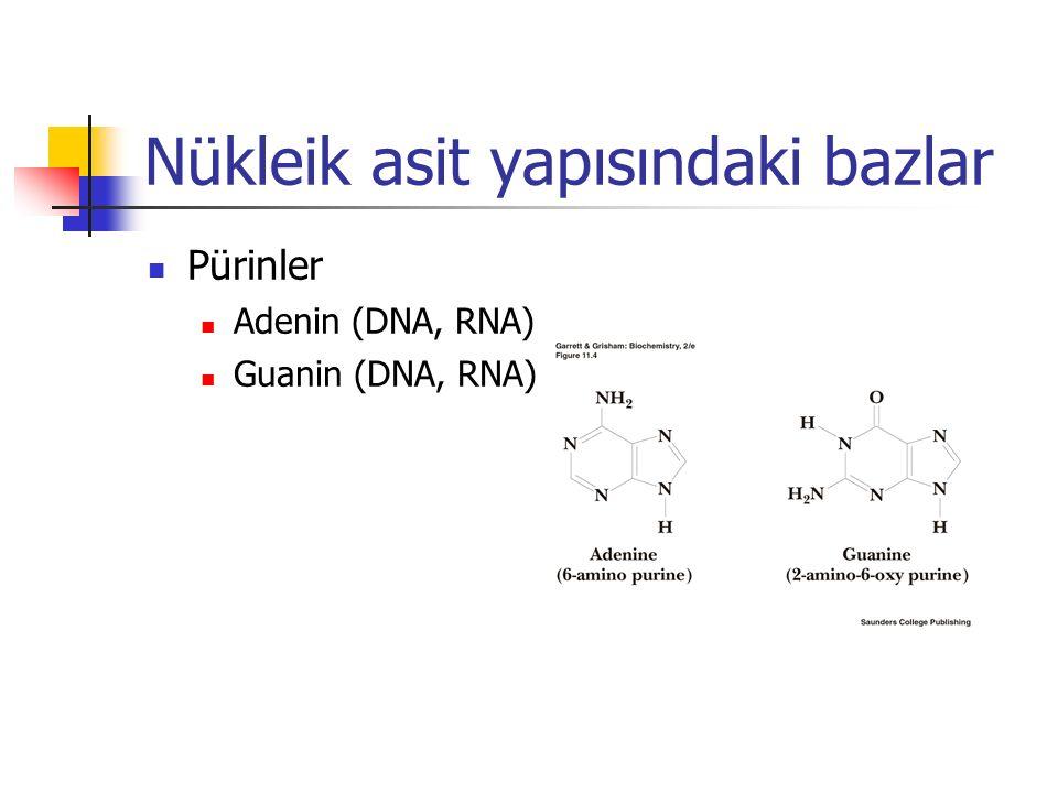 Nükleik asit yapısındaki bazlar Pürinler Adenin (DNA, RNA) Guanin (DNA, RNA)
