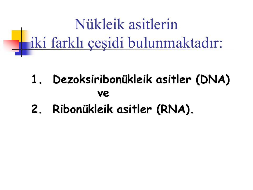Nükleik asitlerin iki farklı çeşidi bulunmaktadır: 1. Dezoksiribonükleik asitler (DNA) ve 2. Ribonükleik asitler (RNA).