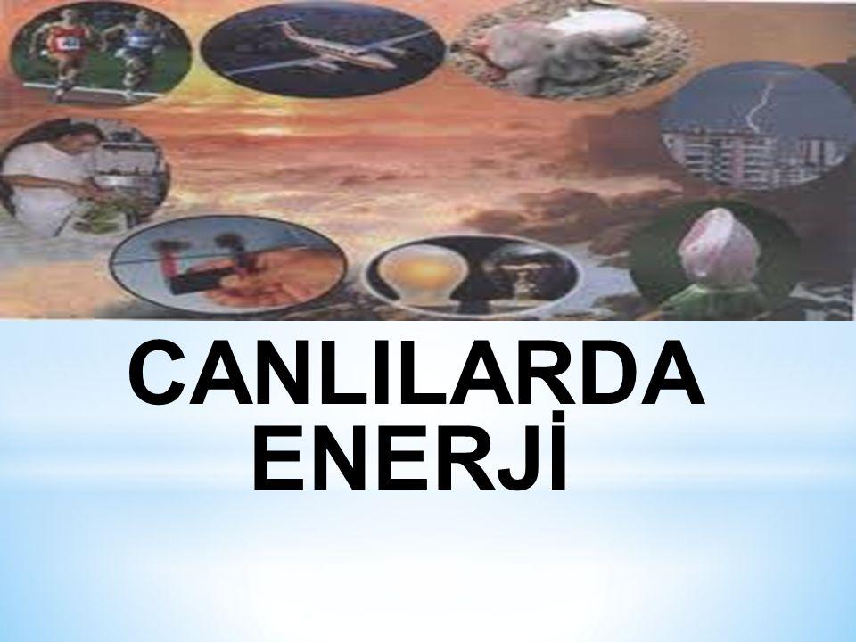 CANLILARDA ENERJİ