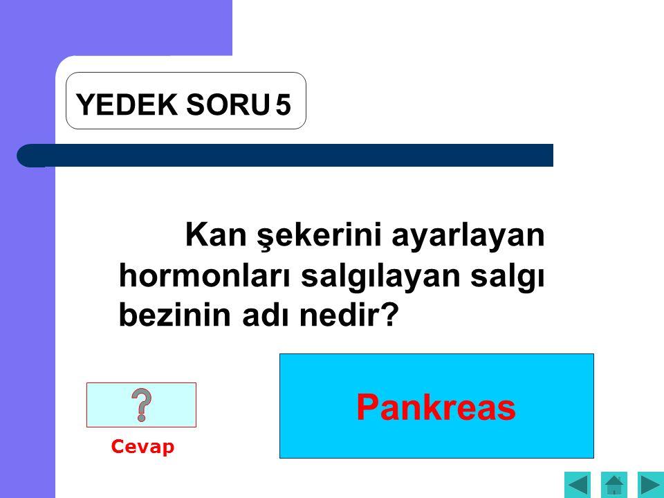 Pankreas Kan şekerini ayarlayan hormonları salgılayan salgı bezinin adı nedir Cevap YEDEK SORU5