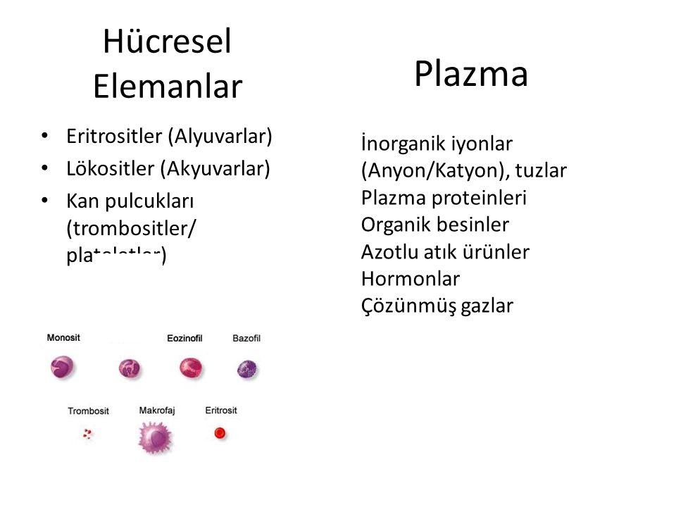Hücresel Elemanlar Eritrositler (Alyuvarlar) Lökositler (Akyuvarlar) Kan pulcukları (trombositler/ plateletler) L İnorganik iyonlar (Anyon/Katyon), tuzlar Plazma proteinleri Organik besinler Azotlu atık ürünler Hormonlar Çözünmüş gazlar Plazma