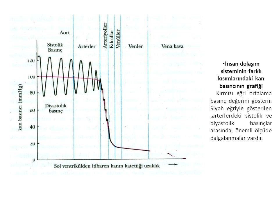 İnsan dolaşım sisteminin farklı kısımlarındaki kan basıncının grafiği Kırmızı eğri ortalama basınç değerini gösterir.