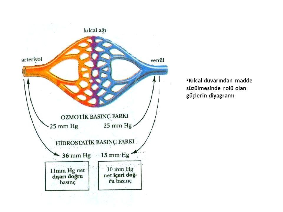 Kılcal duvarından madde süzülmesinde rolü olan güçlerin diyagramı