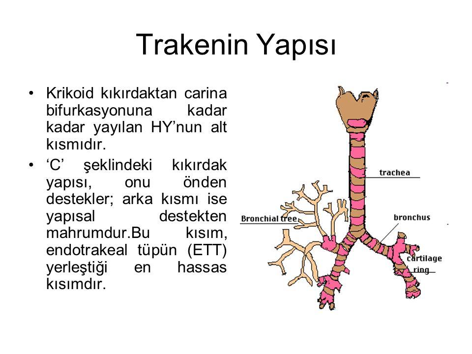 Trakenin Yapısı Krikoid kıkırdaktan carina bifurkasyonuna kadar kadar yayılan HY'nun alt kısmıdır.