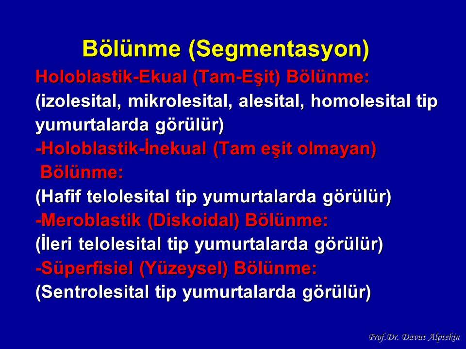 Bölünme (Segmentasyon) Holoblastik-Ekual (Tam-Eşit) Bölünme: (izolesital, mikrolesital, alesital, homolesital tip yumurtalarda görülür) -Holoblastik-İ