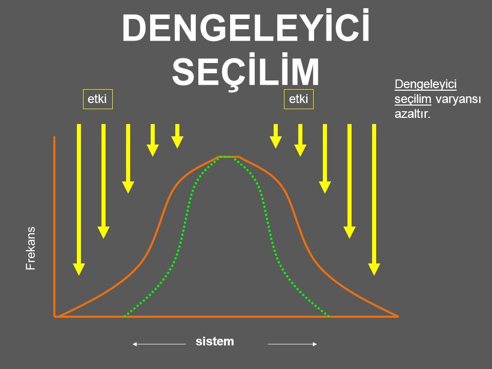 DENGELEYİCİ SEÇİLİM Frekans etki sistem Dengeleyici seçilim varyansı azaltır.