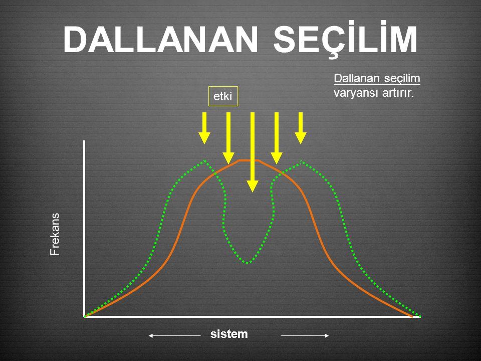 DALLANAN SEÇİLİM Frekans etki sistem Dallanan seçilim varyansı artırır.