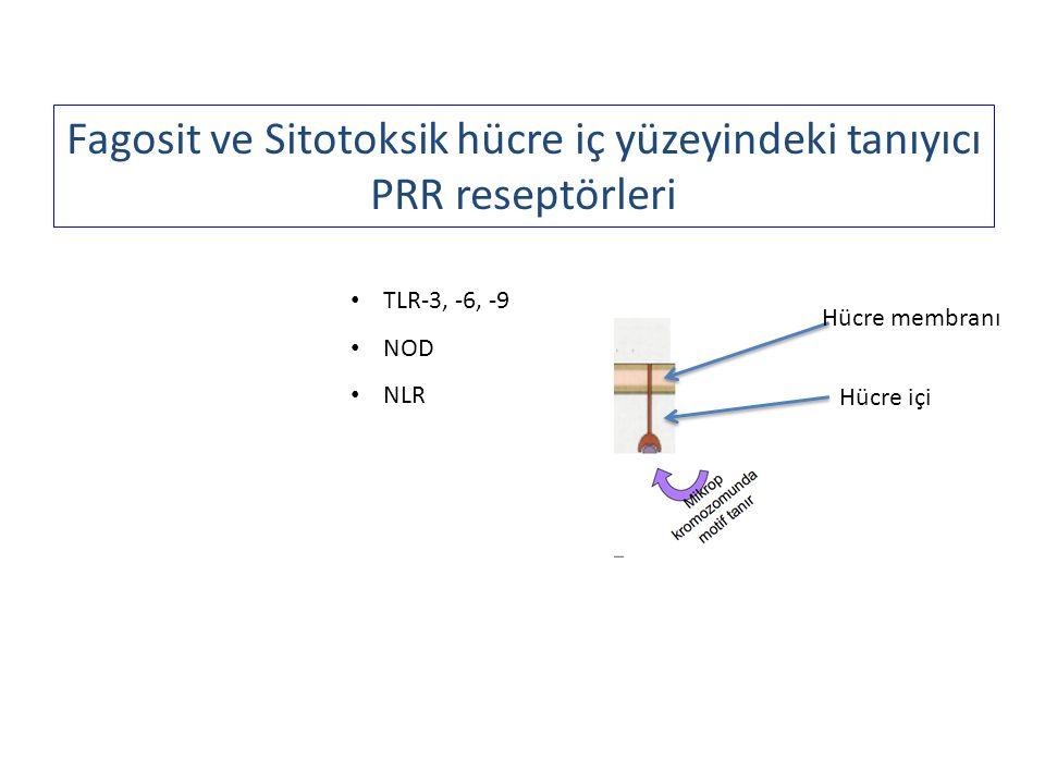 Fagosit ve Sitotoksik hücre iç yüzeyindeki tanıyıcı PRR reseptörleri TLR-3, -6, -9 NOD NLR Hücre membranı Hücre içi