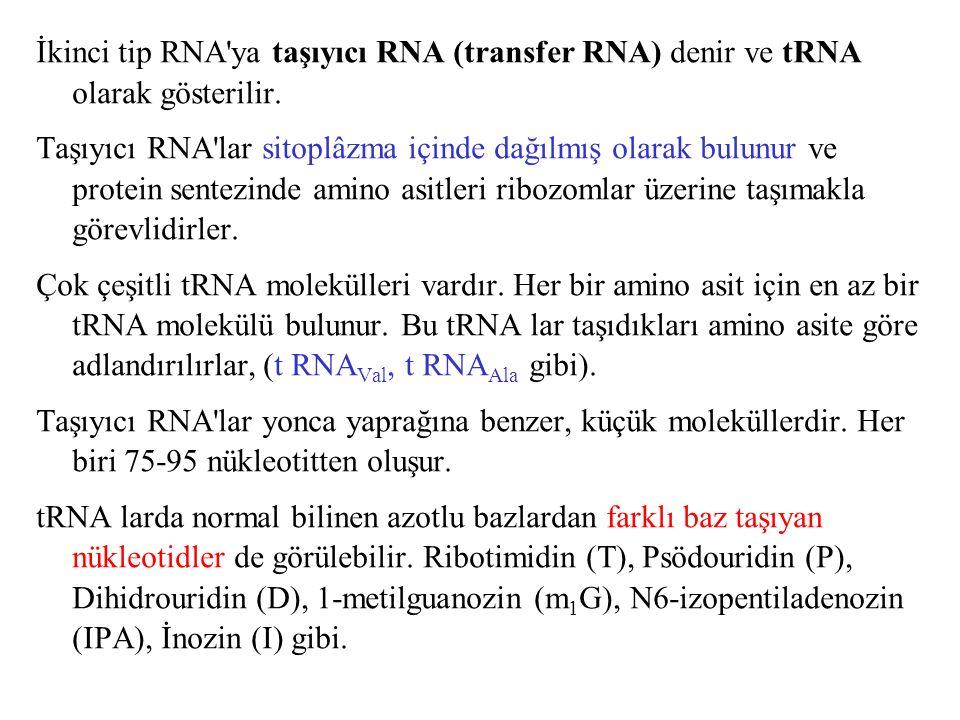 İkinci tip RNA'ya taşıyıcı RNA (transfer RNA) denir ve tRNA olarak gösterilir. Taşıyıcı RNA'lar sitoplâzma içinde dağılmış olarak bulunur ve protein s