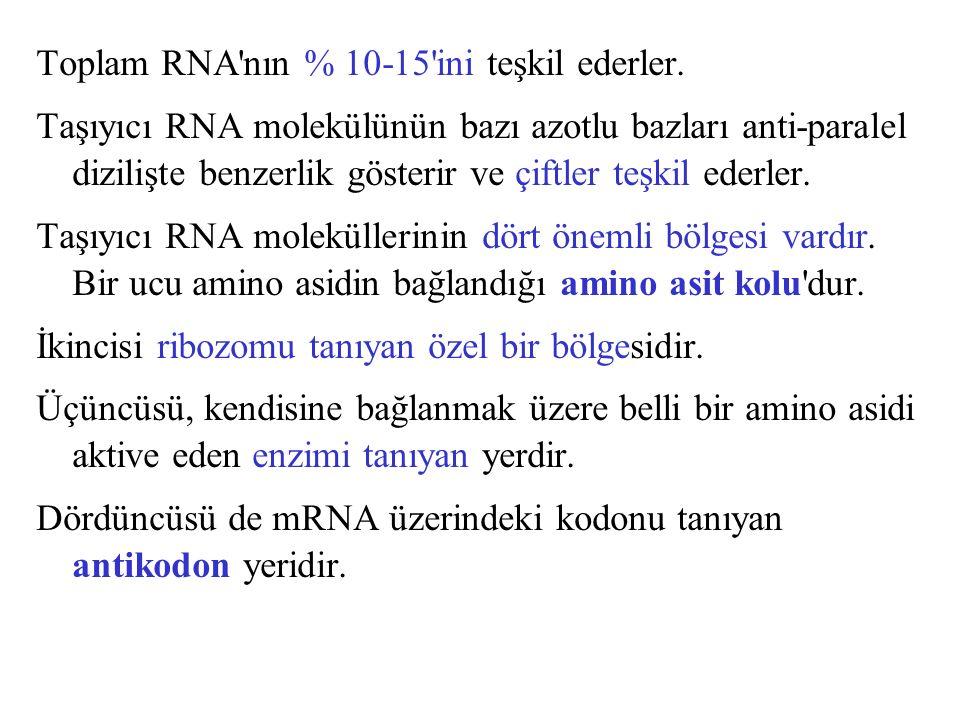Toplam RNA'nın % 10-15'ini teşkil ederler. Taşıyıcı RNA molekülünün bazı azotlu bazları anti-paralel dizilişte benzerlik gösterir ve çiftler teşkil ed