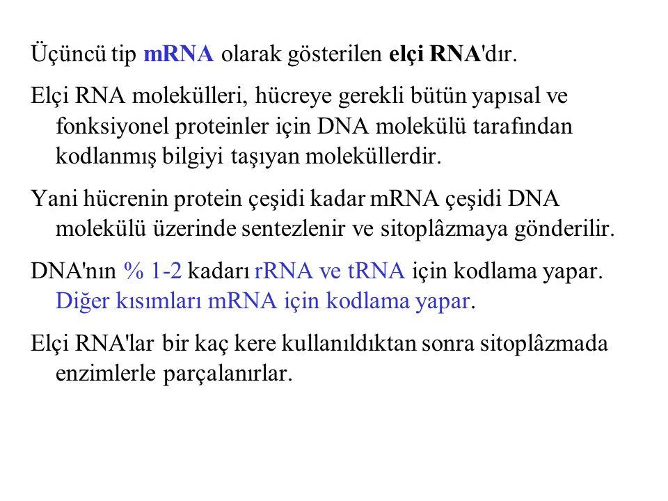 Üçüncü tip mRNA olarak gösterilen elçi RNA'dır. Elçi RNA molekülleri, hücreye gerekli bütün yapısal ve fonksiyonel proteinler için DNA molekülü tarafı