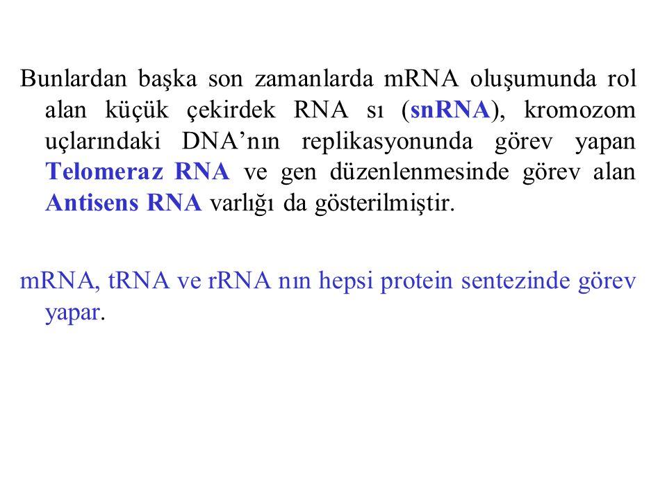 Bunlardan başka son zamanlarda mRNA oluşumunda rol alan küçük çekirdek RNA sı (snRNA), kromozom uçlarındaki DNA'nın replikasyonunda görev yapan Telome