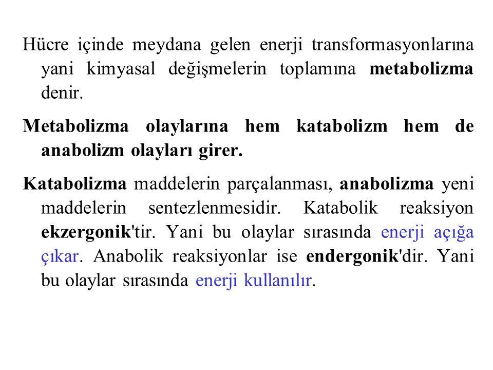 Hücre içinde meydana gelen enerji transformasyonlarına yani kimyasal değişmelerin toplamına metabolizma denir. Metabolizma olaylarına hem katabolizm h