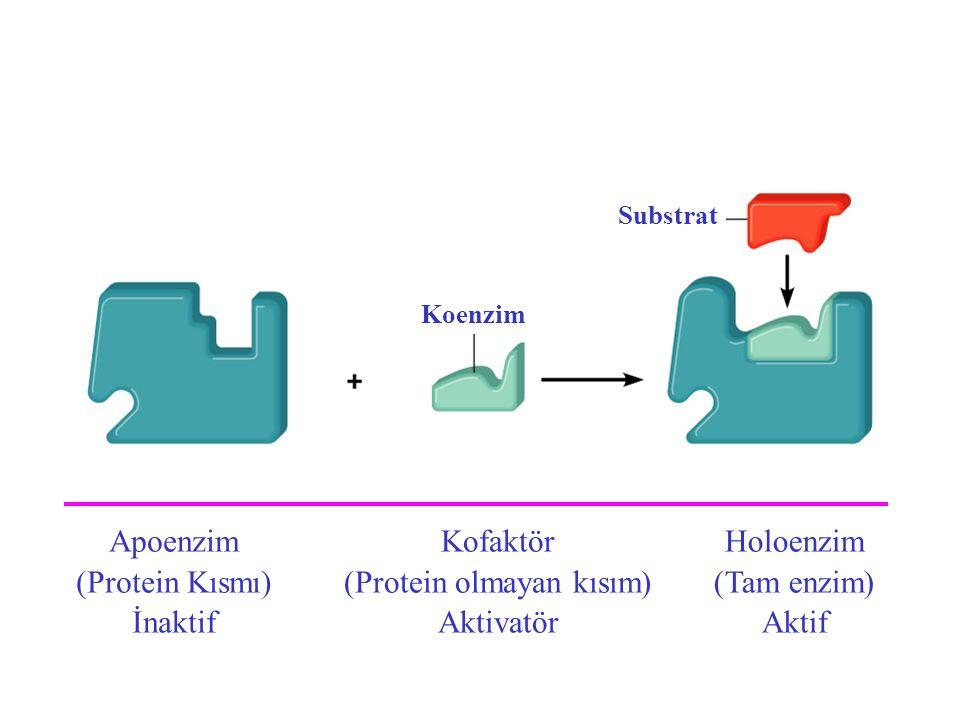 Apoenzim (Protein Kısmı) İnaktif Kofaktör (Protein olmayan kısım) Aktivatör Holoenzim (Tam enzim) Aktif Koenzim Substrat