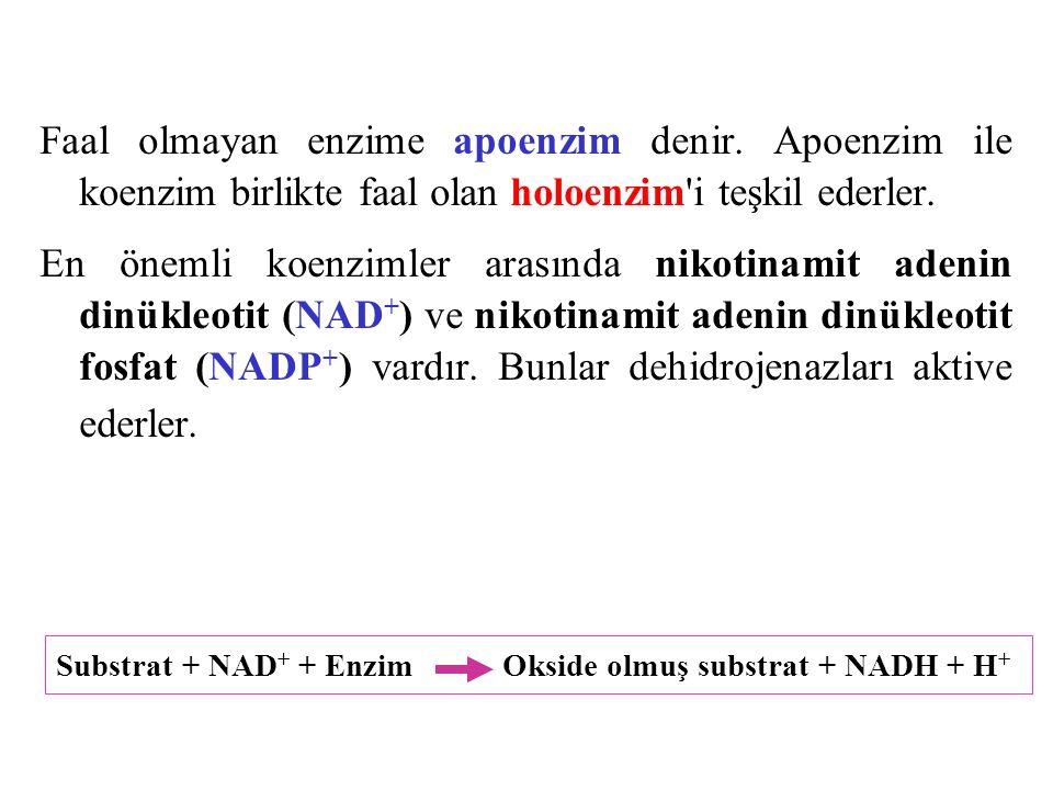 Hücrede enerji verecek katabolik olaylar için NAD + ye, anabolik olaylar için NADP + ye ihtiyaç vardır.