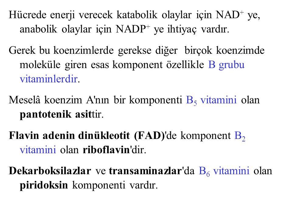 Hücrede enerji verecek katabolik olaylar için NAD + ye, anabolik olaylar için NADP + ye ihtiyaç vardır. Gerek bu koenzimlerde gerekse diğer birçok koe