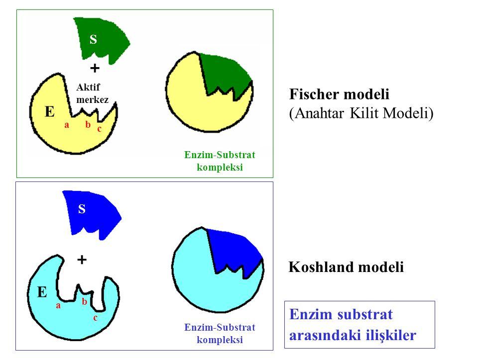 S + E a Aktif merkez Enzim-Substrat kompleksi E S + c b a c b Fischer modeli (Anahtar Kilit Modeli) Koshland modeli Enzim substrat arasındaki ilişkile