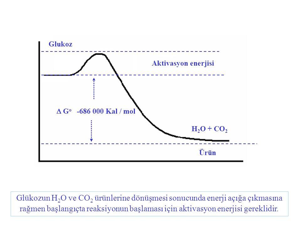 Glukoz Aktivasyon enerjisi  G o -686 000 Kal / mol H 2 O + CO 2 Ürün Glükozun H 2 O ve CO 2 ürünlerine dönüşmesi sonucunda enerji açığa çıkmasına ra