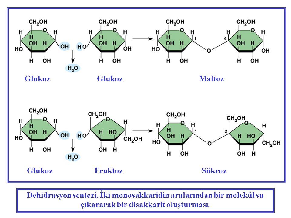 Dehidrasyon sentezi. İki monosakkaridin aralarından bir molekül su çıkararak bir disakkarit oluşturması. Glukoz GlukozMaltoz Glukoz FruktozSükroz