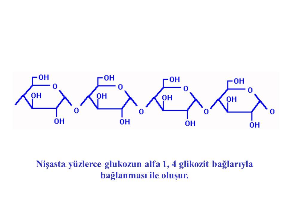 Nişasta yüzlerce glukozun alfa 1, 4 glikozit bağlarıyla bağlanması ile oluşur.