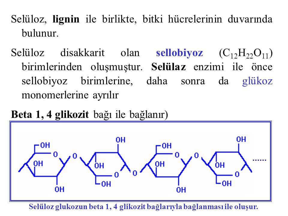 Selüloz, lignin ile birlikte, bitki hücrelerinin duvarında bulunur. Selüloz disakkarit olan sellobiyoz (C 12 H 22 O 11 ) birimlerinden oluşmuştur. Sel