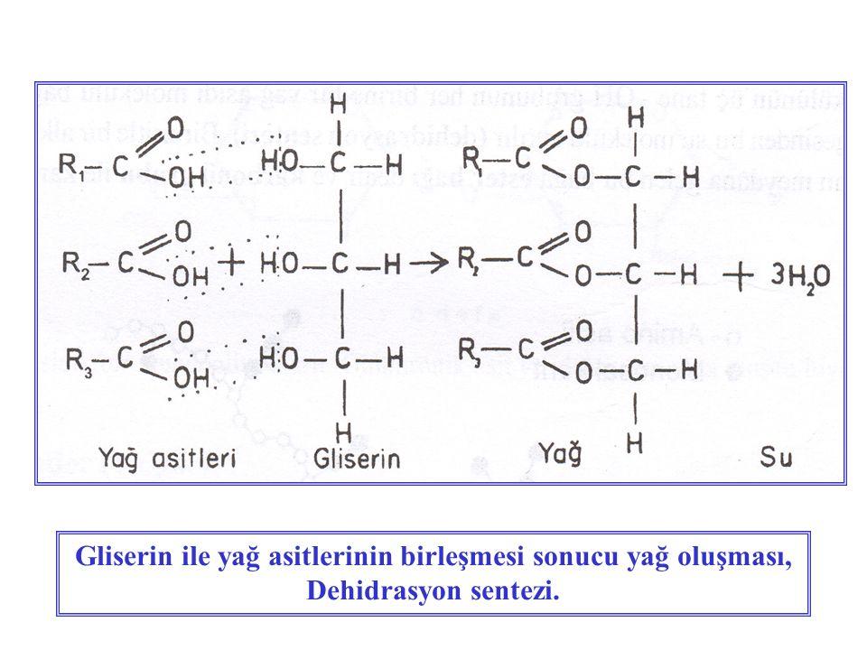 Gliserin ile yağ asitlerinin birleşmesi sonucu yağ oluşması, Dehidrasyon sentezi.