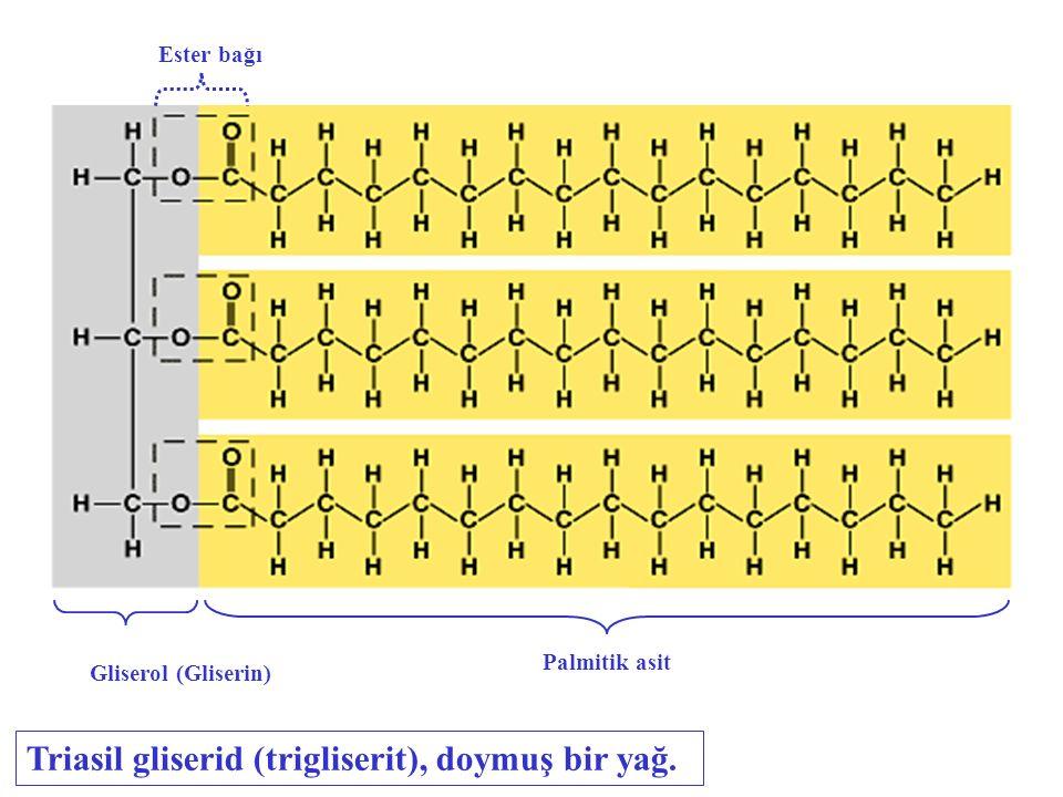 Gliserine bir veya iki yağ asidi zinciri de bağlı olabilir.