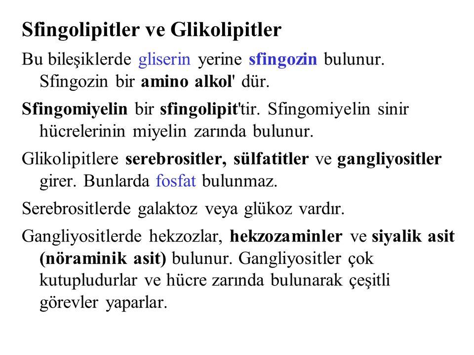 Sfingolipitler ve Glikolipitler Bu bileşiklerde gliserin yerine sfingozin bulunur. Sfingozin bir amino alkol' dür. Sfingomiyelin bir sfingolipit'tir.