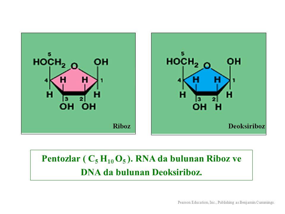 Heksozlardan en önemlisi glükoz dur. Glükozun formülü C 6 H 12 O 6 şeklindedir.