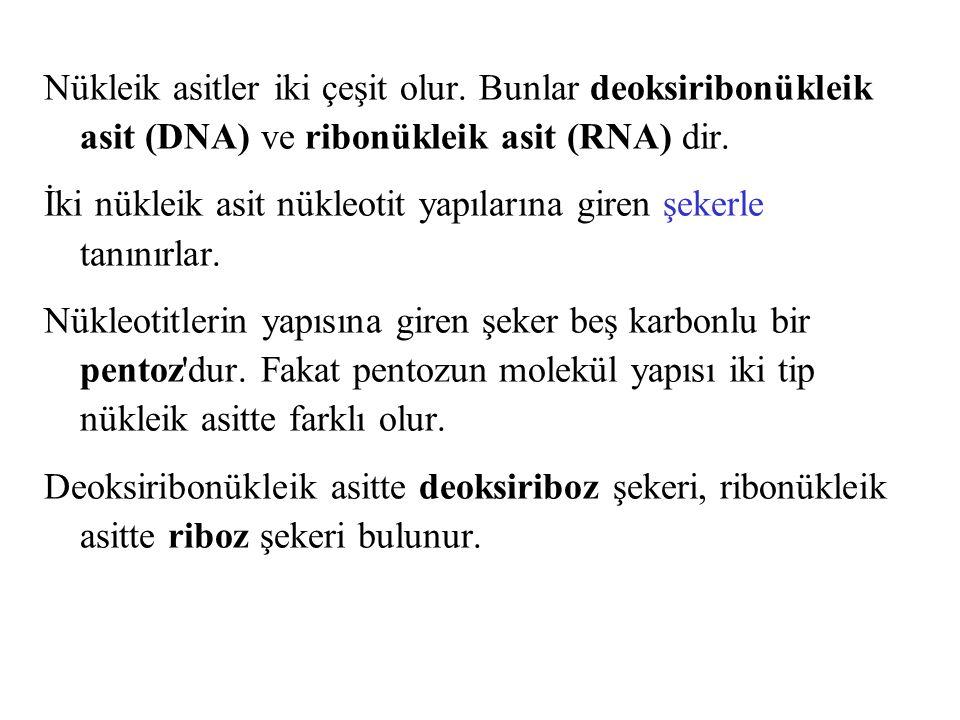 Nükleik asitler iki çeşit olur. Bunlar deoksiribonükleik asit (DNA) ve ribonükleik asit (RNA) dir. İki nükleik asit nükleotit yapılarına giren şekerle