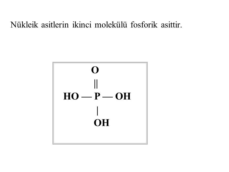 Nükleik asitlerin ikinci molekülü fosforik asittir. O || HO — P — OH | OH