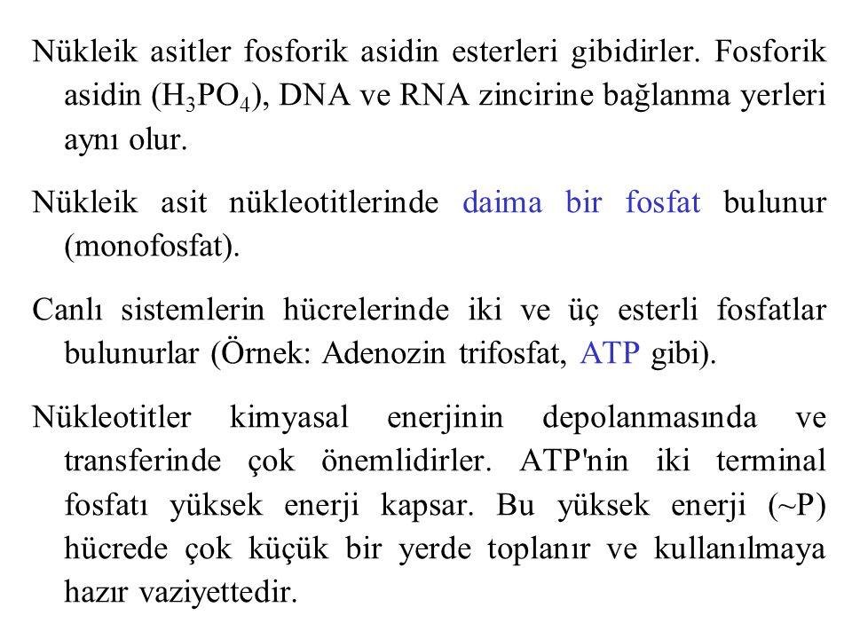 Nükleik asitler fosforik asidin esterleri gibidirler. Fosforik asidin (H 3 PO 4 ), DNA ve RNA zincirine bağlanma yerleri aynı olur. Nükleik asit nükle