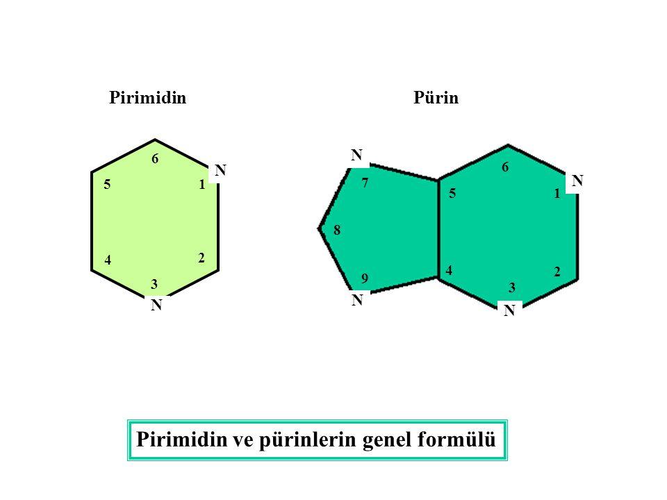 N N N N N N 1 2 3 4 5 6 6 1 2 3 4 5 7 8 9 PirimidinPürin Pirimidin ve pürinlerin genel formülü