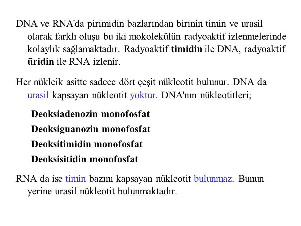 DNA ve RNA'da pirimidin bazlarından birinin timin ve urasil olarak farklı oluşu bu iki mokolekülün radyoaktif izlenmelerinde kolaylık sağlamaktadır. R