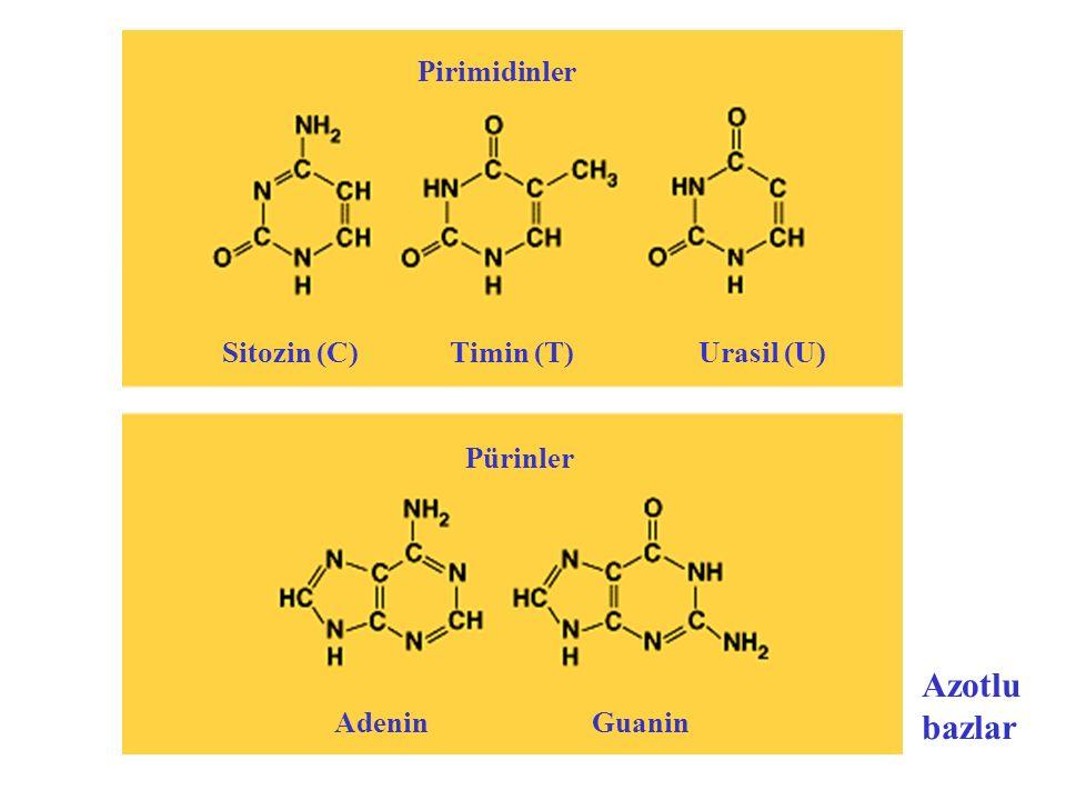 Adenin nükleotit Guanin nükleotitTimin nükleotit Sitozin nükleotit