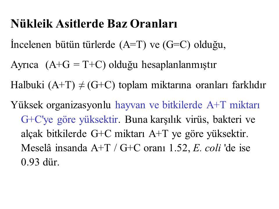 Nükleik Asitlerde Baz Oranları İncelenen bütün türlerde (A=T) ve (G=C) olduğu, Ayrıca (A+G = T+C) olduğu hesaplanlanmıştır Halbuki (A+T) ≠ (G+C) topla