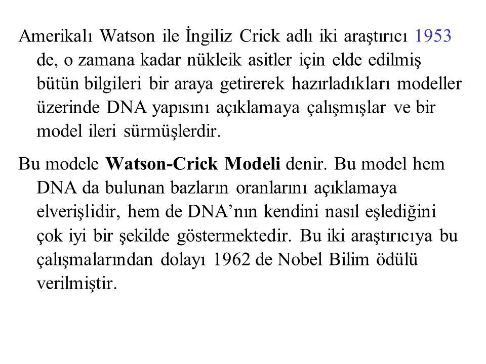Amerikalı Watson ile İngiliz Crick adlı iki araştırıcı 1953 de, o zamana kadar nükleik asitler için elde edilmiş bütün bilgileri bir araya getirerek h