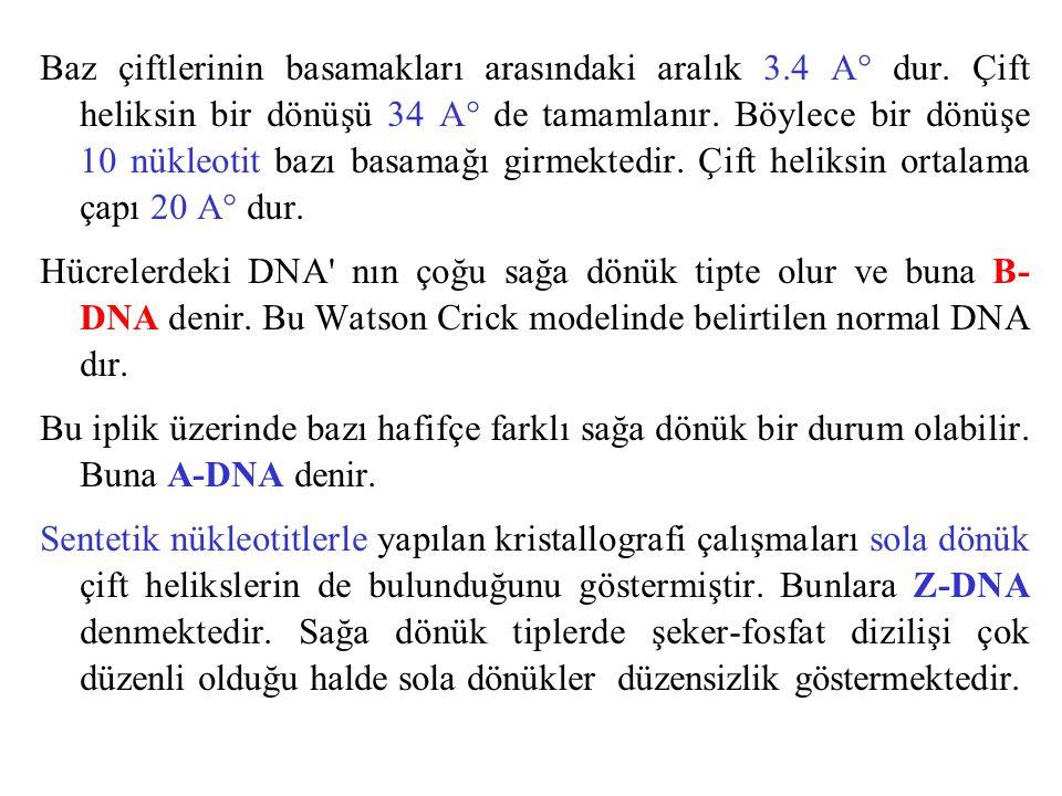 A DNA B DNA Z DNA http://etc.lyac.edu.cn/courseware/03_04shengwuhuaxue/ch03/section3.htm http://etc.lyac.edu.cn/courseware/03_04shengwuhuaxue/ch03/section3.htm