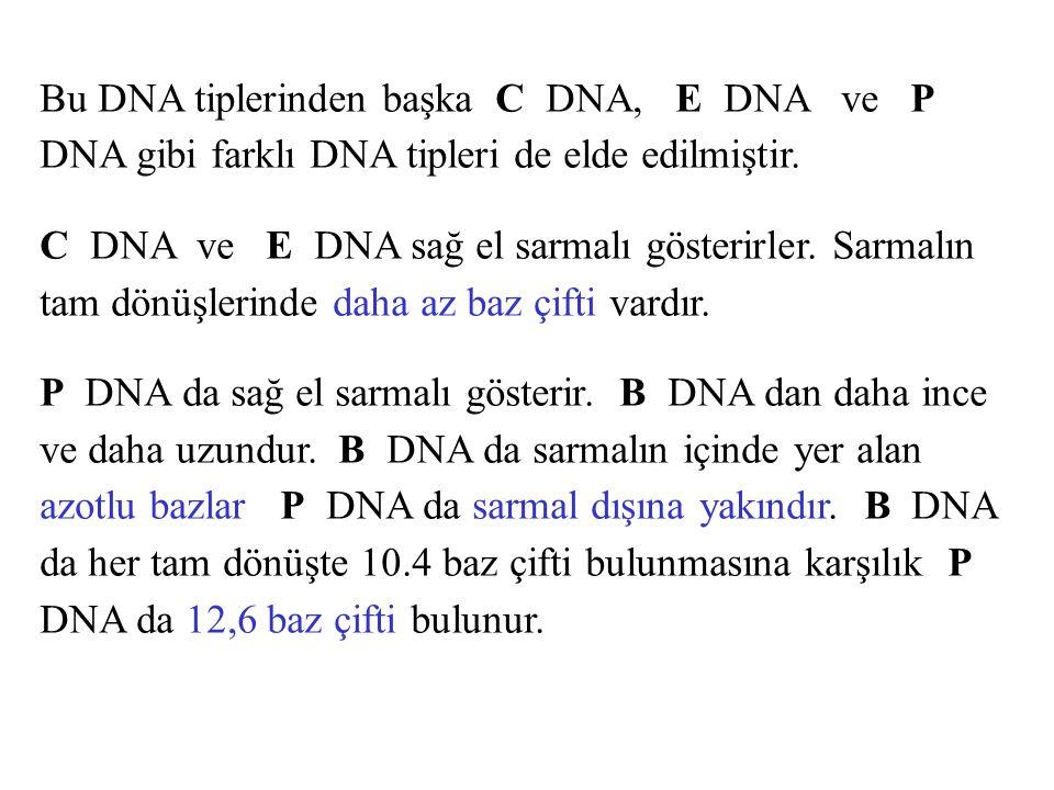 Bu DNA tiplerinden başka C DNA, E DNA ve P DNA gibi farklı DNA tipleri de elde edilmiştir. C DNA ve E DNA sağ el sarmalı gösterirler. Sarmalın tam dön