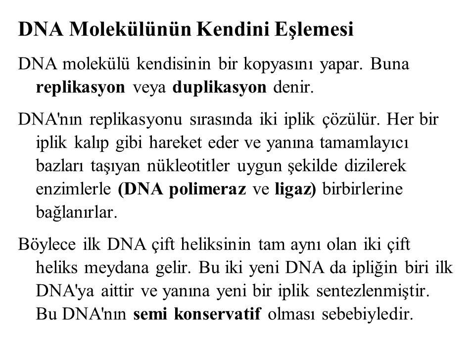 DNA Molekülünün Kendini Eşlemesi DNA molekülü kendisinin bir kopyasını yapar. Buna replikasyon veya duplikasyon denir. DNA'nın replikasyonu sırasında