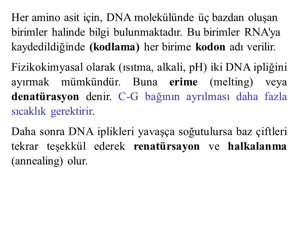 Her amino asit için, DNA molekülünde üç bazdan oluşan birimler halinde bilgi bulunmaktadır. Bu birimler RNA'ya kaydedildiğinde (kodlama) her birime ko