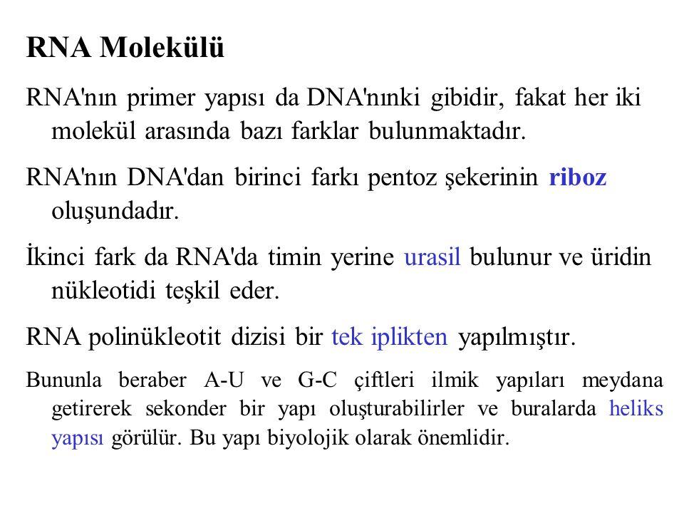 RNA Molekülü RNA'nın primer yapısı da DNA'nınki gibidir, fakat her iki molekül arasında bazı farklar bulunmaktadır. RNA'nın DNA'dan birinci farkı pent