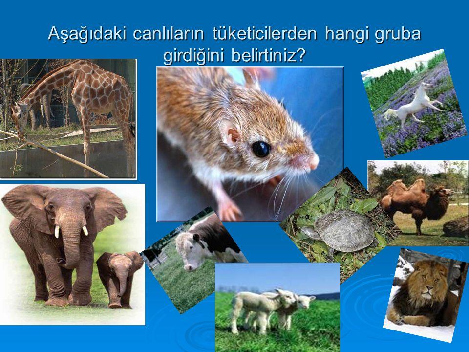 Aşağıdaki canlıların tüketicilerden hangi gruba girdiğini belirtiniz