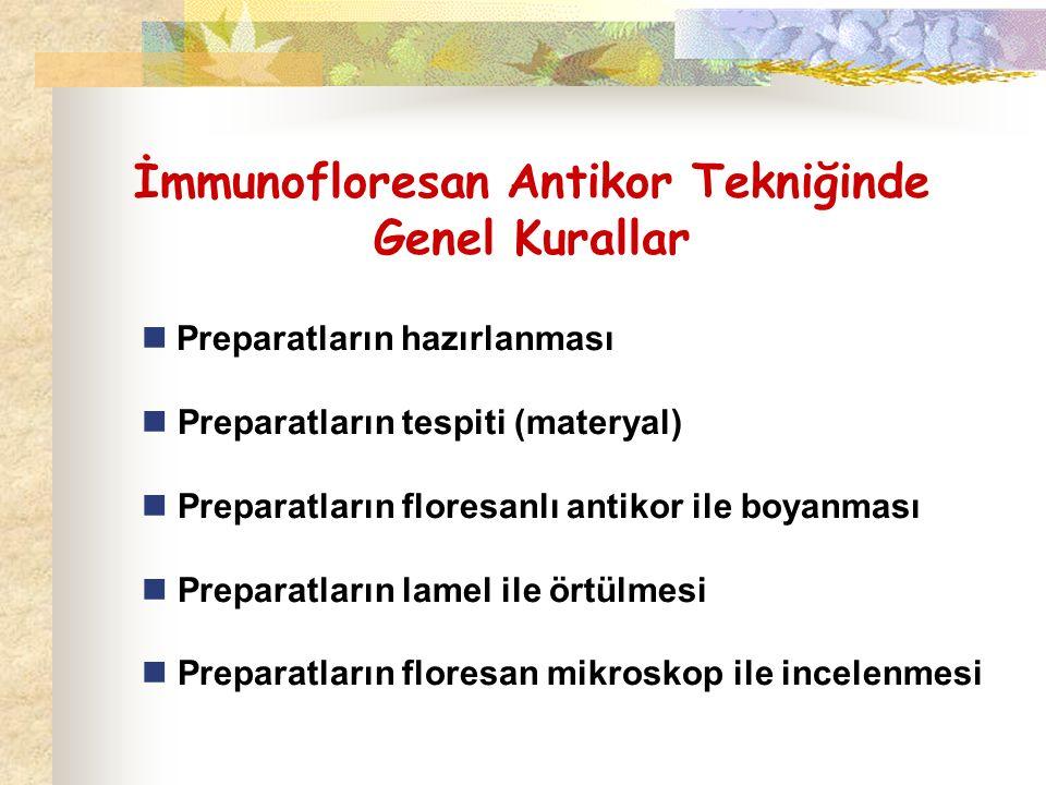 İmmunofloresan Antikor Tekniğinde Genel Kurallar Preparatların hazırlanması Preparatların tespiti (materyal) Preparatların floresanlı antikor ile boya