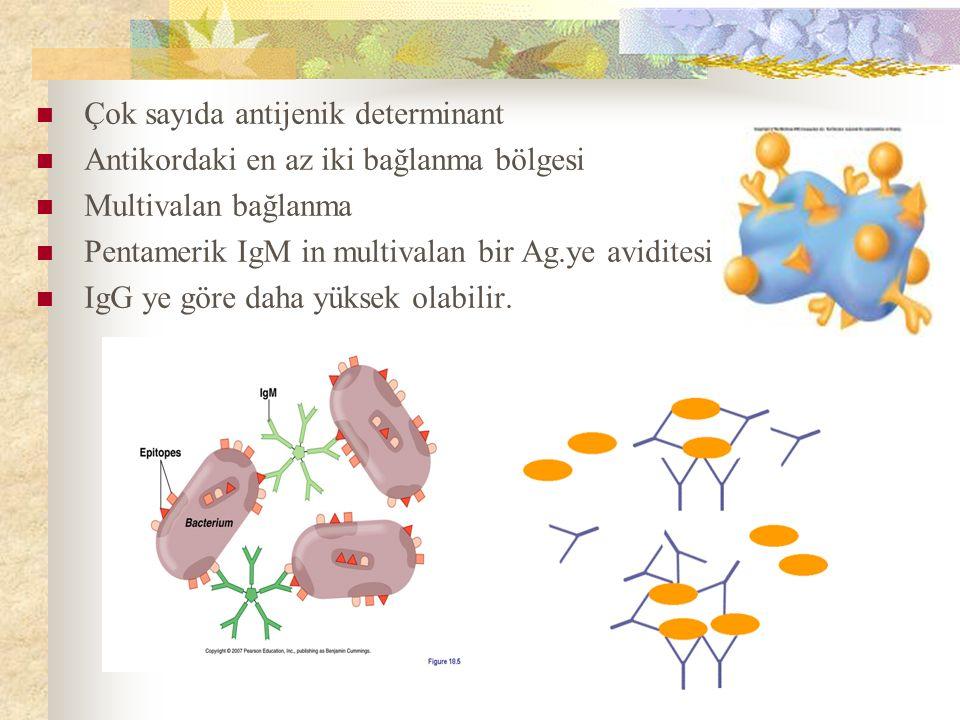 Çok sayıda antijenik determinant Antikordaki en az iki bağlanma bölgesi Multivalan bağlanma Pentamerik IgM in multivalan bir Ag.ye aviditesi IgG ye göre daha yüksek olabilir.